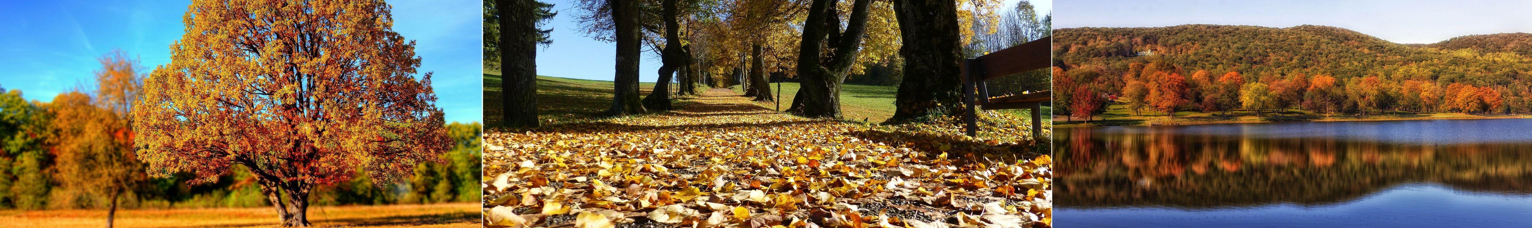 Autumn2
